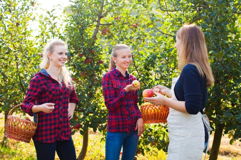Apfelgarten- und openspacemarkt auf dem Bauernhof lizenzfreies stockfoto