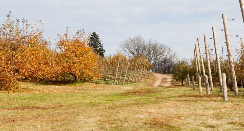 Apfelgarten voll von rippend Äpfeln. lizenzfreies stockbild