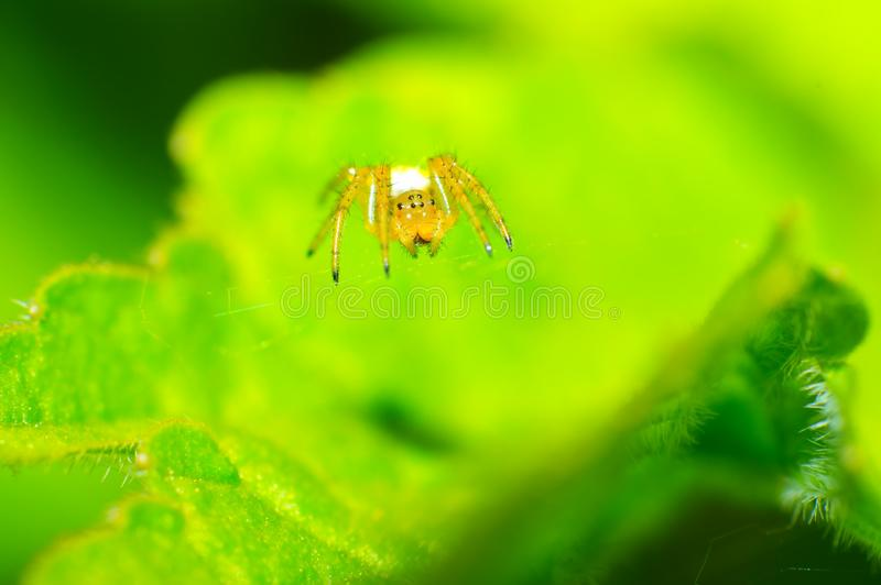 Download Aphantochilidae stock photo. Image of invertebrate, small - 25092552