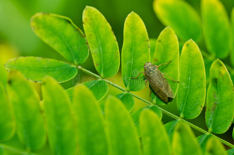 Download Aphid Insect In Green Nature Royalty Free Stock Photo - Image: 22859795