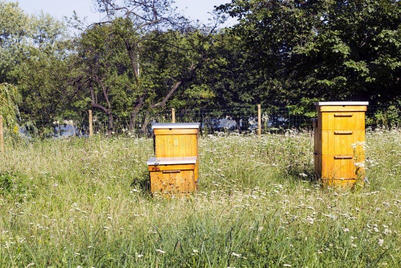 Apiário de madeira no campo verde fotos de stock