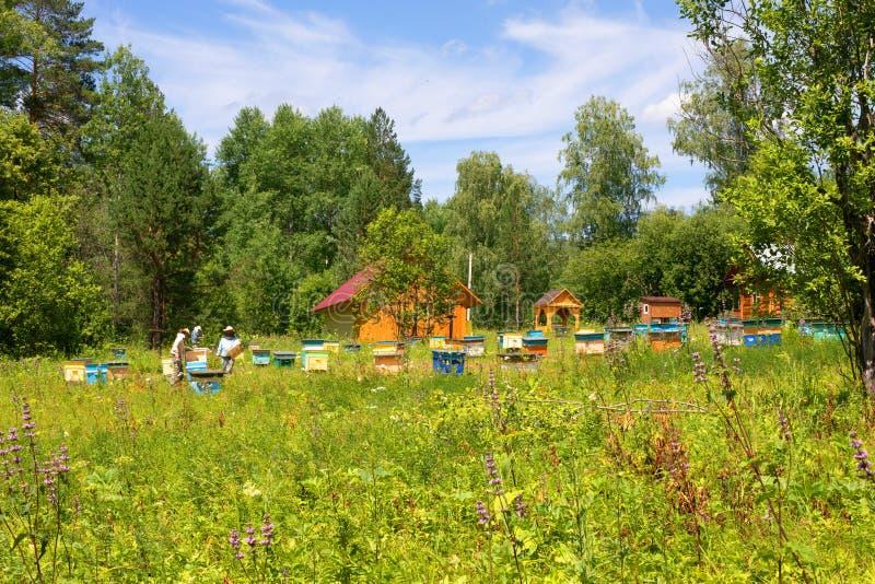 Apiário na floresta no prado, colmeias com abelhas, trabalho dos apicultor imagem de stock
