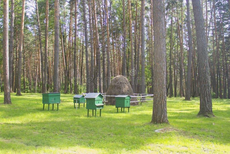 Apiário nas madeiras hives abelhas fotografia de stock royalty free