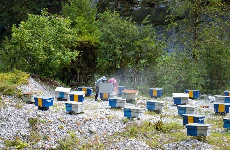 Apiário nas montanhas de Cáucaso do país a Abkhásia imagens de stock
