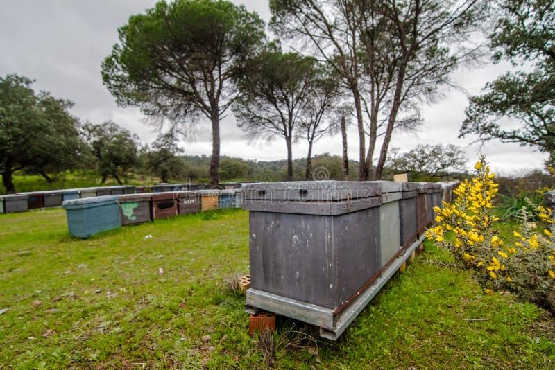 Apiário no campo com grama e pinheiros fotografia de stock royalty free