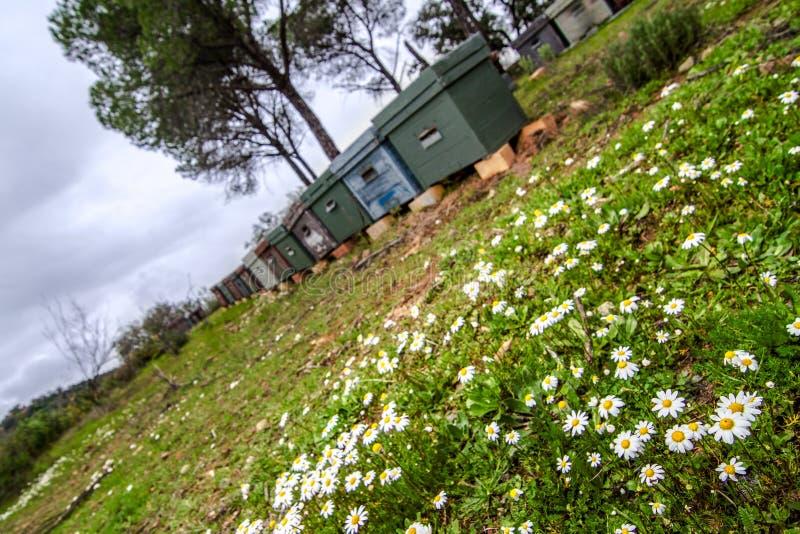 Apiário no campo com grama e pinheiros foto de stock royalty free