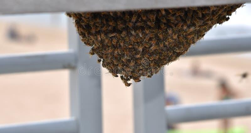 Api che sciamano intorno all'ape regina sotto un banco fotografia stock libera da diritti