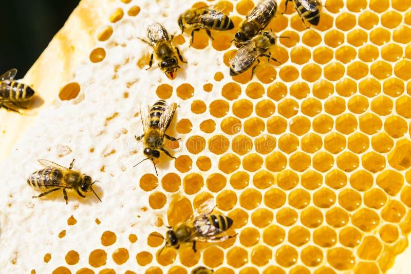 Api sui honeycells fotografie stock