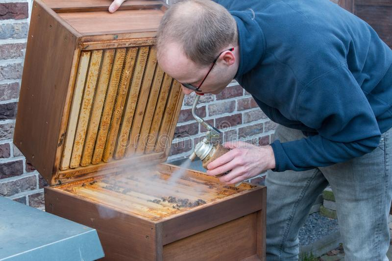 Beekeeper checks his bee colony using smoke. A apiarist looks into the beehive to check the size of his bee colony after the winter. He uses smoke to suppress stock photo