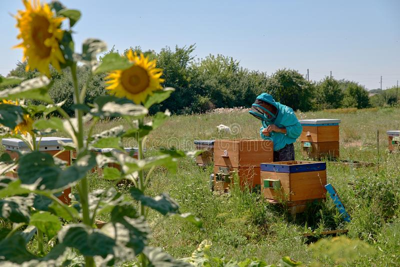 Apiarist in protective suit inspects beehives. royalty free stock images