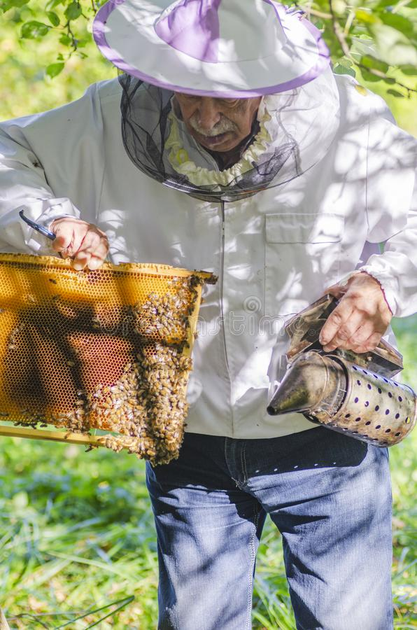 Apiarist sup?rieur proc?dant ? l'inspection dans le rucher photo libre de droits
