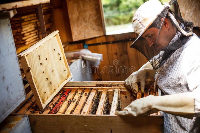 Apiarist travaillant images stock
