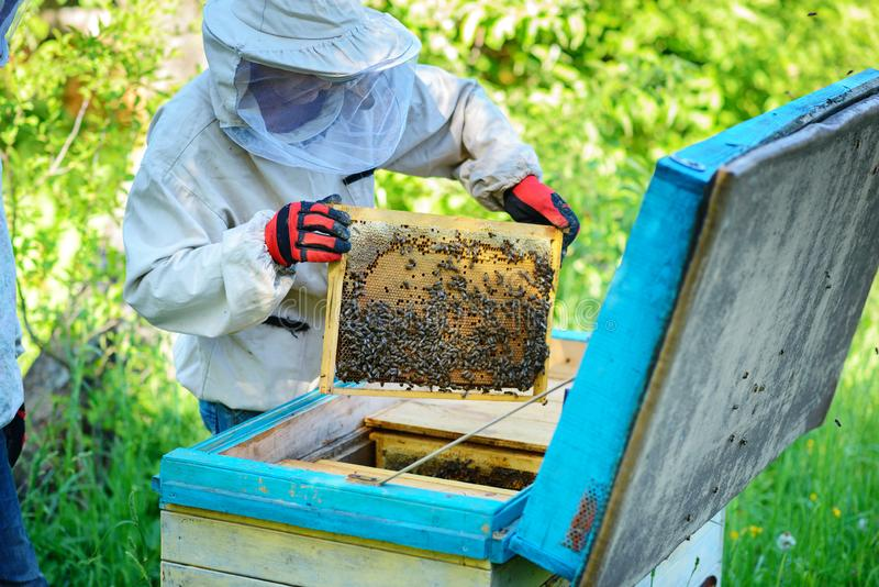 Apiary. The beekeeper works with bees near the hives stock photography