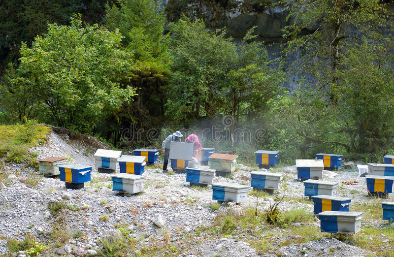 Apiary in the Caucasus mountains of country Abkhazia. stock images