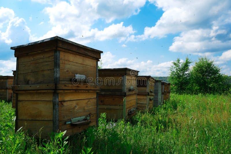 apiary Een bijenkorf van een boom bevindt zich op een bijenstal De huizen van de bijen worden geplaatst op het groene gras in de  stock afbeelding