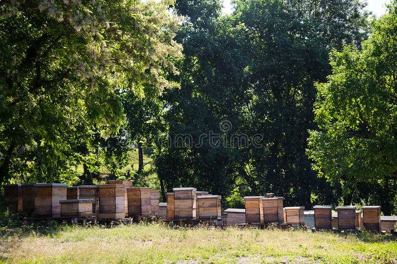 Apiary farm - bees hives in shadow of trees in summer time stock photo