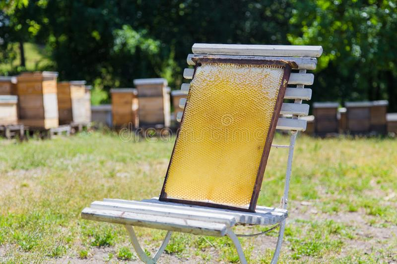 Apiary hive frame with bees wax structure full of fresh bee honey on wooden rustic chair. Composition of apiary frame form with bee honey on old white chair royalty free stock photo