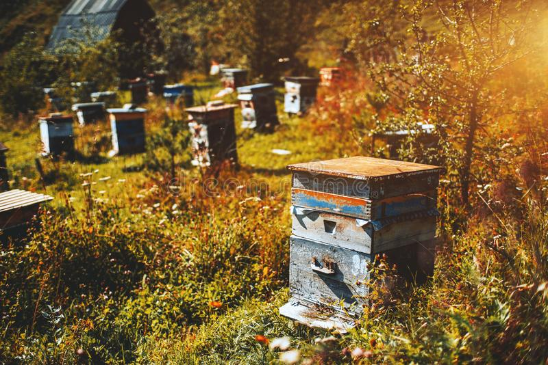Apiary on meadow of Altay mountains. Close-up view of wooden bee-hive unit standing on autumn grassland of Altai mountains with wildflowers and native grasses royalty free stock photography