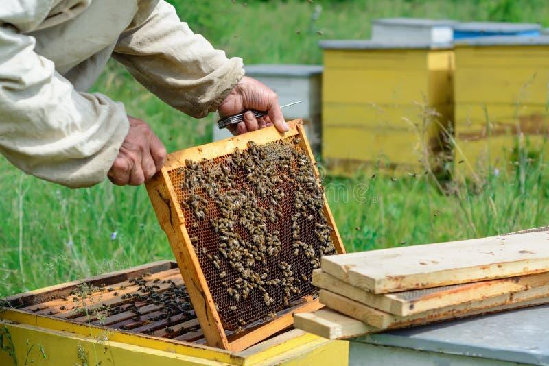 apiary O apicultor trabalha com as abelhas perto das colmeia Apicultura imagens de stock royalty free