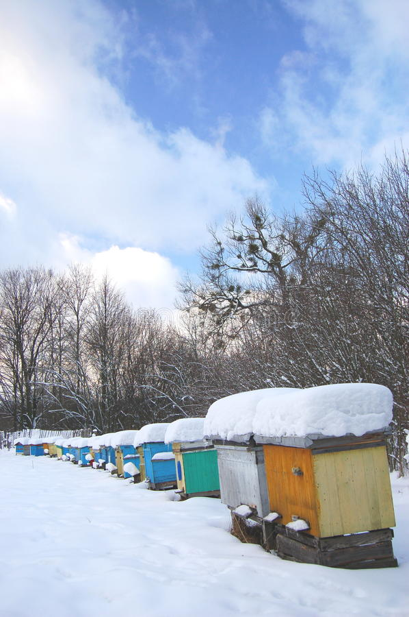 Download Apiary in wintertime stock image. Image of branch, apiary - 17576315
