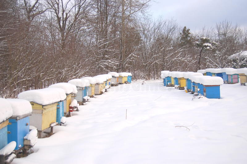 Download Apiary in wintertime stock image. Image of beekeeping - 17576371