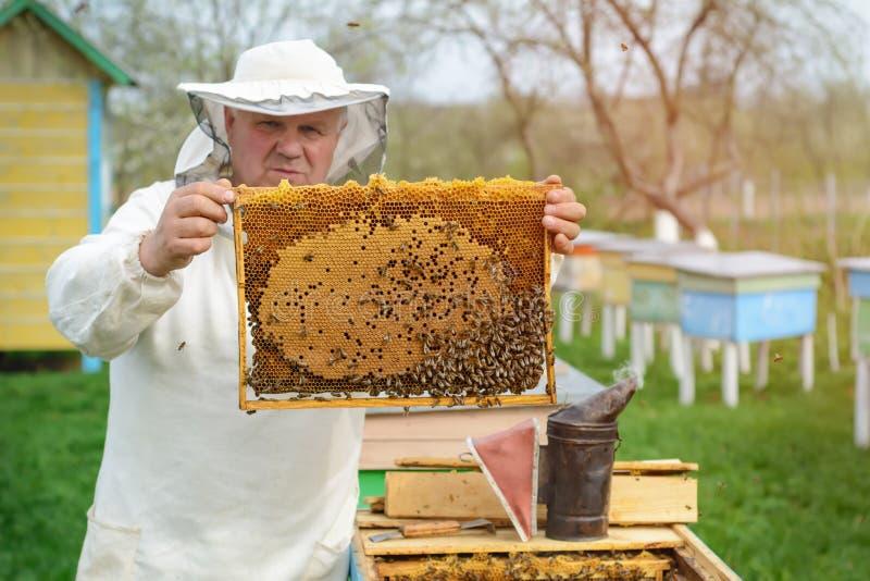 Apicoltore che giudica un favo pieno delle api Apicoltore in abiti da lavoro protettivi che ispezionano la struttura del favo all fotografia stock