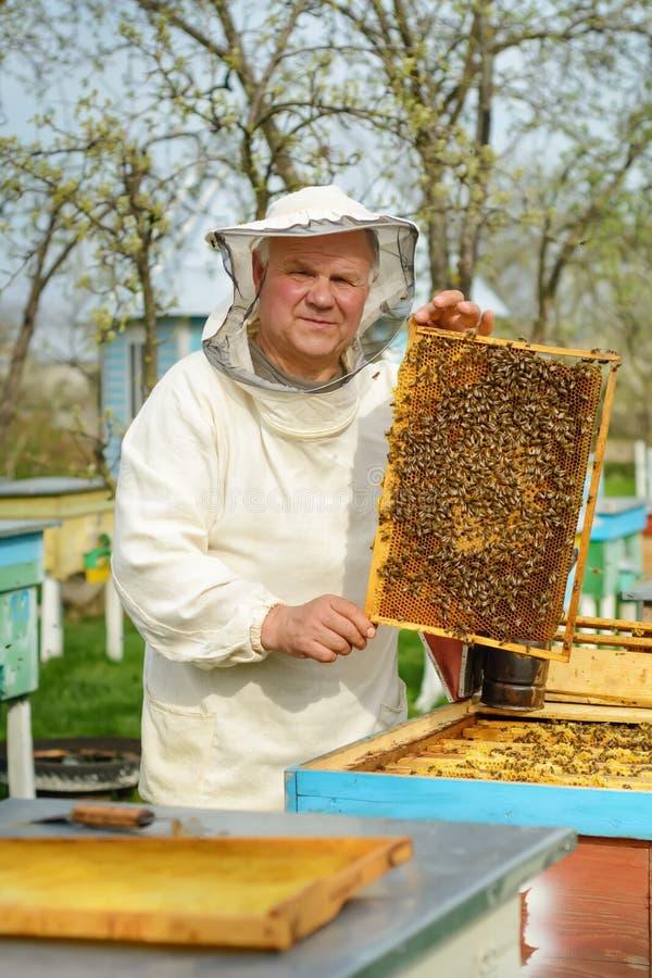 Apicoltore che giudica un favo pieno delle api Apicoltore in abiti da lavoro protettivi che ispezionano la struttura del favo all immagine stock libera da diritti