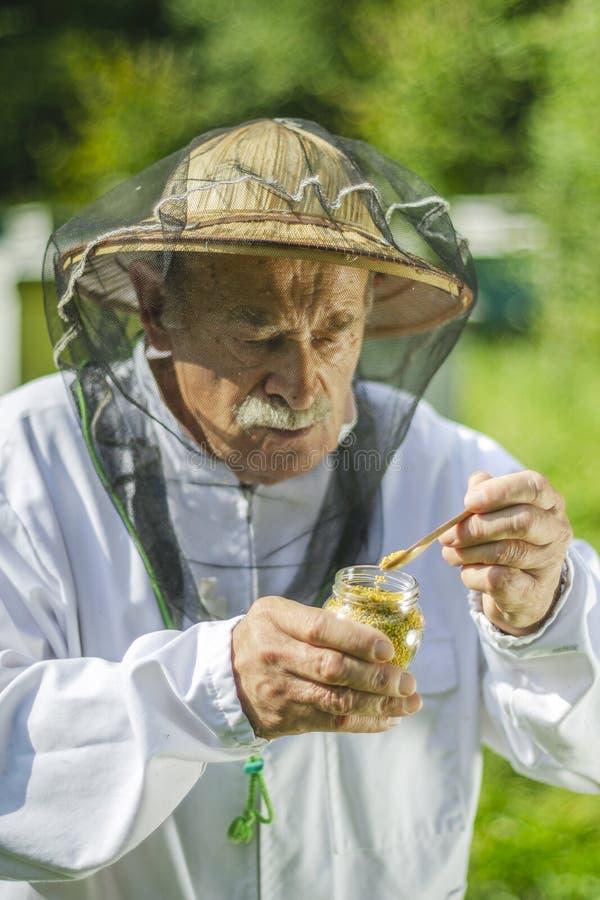 Apicoltore senior che controlla il polline dell'ape in arnia immagini stock libere da diritti