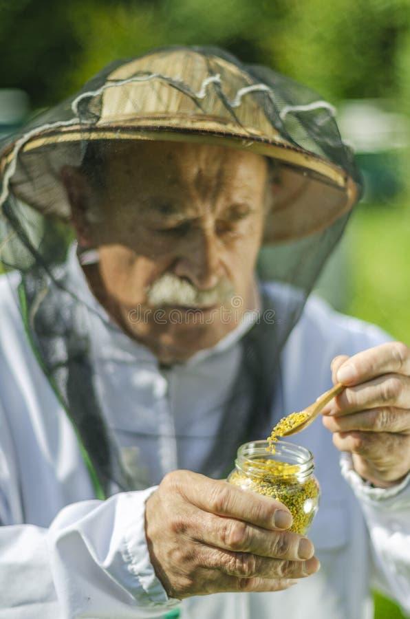 Apicoltore senior che controlla il polline dell'ape in arnia fotografia stock libera da diritti