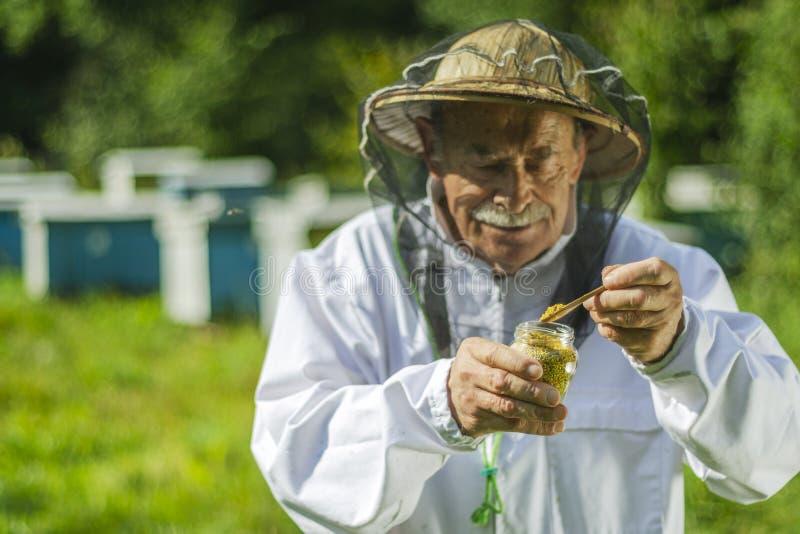 Apicoltore senior che controlla il polline dell'ape in arnia immagini stock