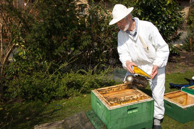 Apiculteur appliquant la fumée à la colonie d'abeille images stock