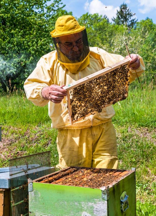 Apiculteur au travail avec des abeilles photos stock