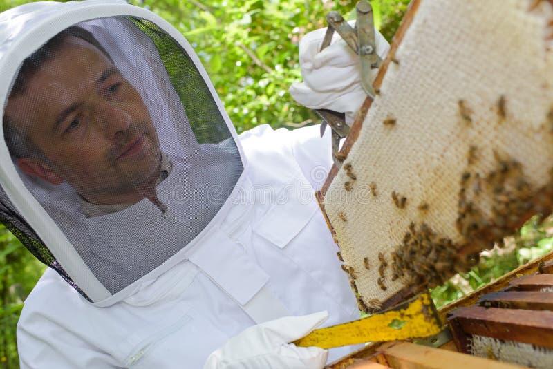 apiculteur 54