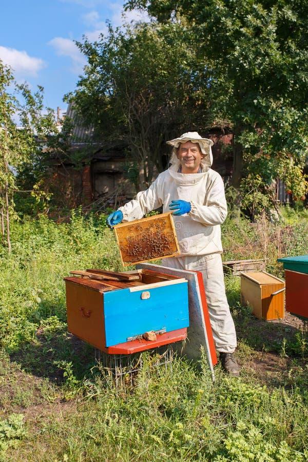 Apiculteur avec le nid d'abeilles dans le rucher photos stock