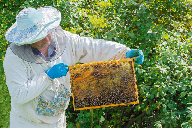 Apiculteur avec un nid d'abeilles plein des abeilles images libres de droits