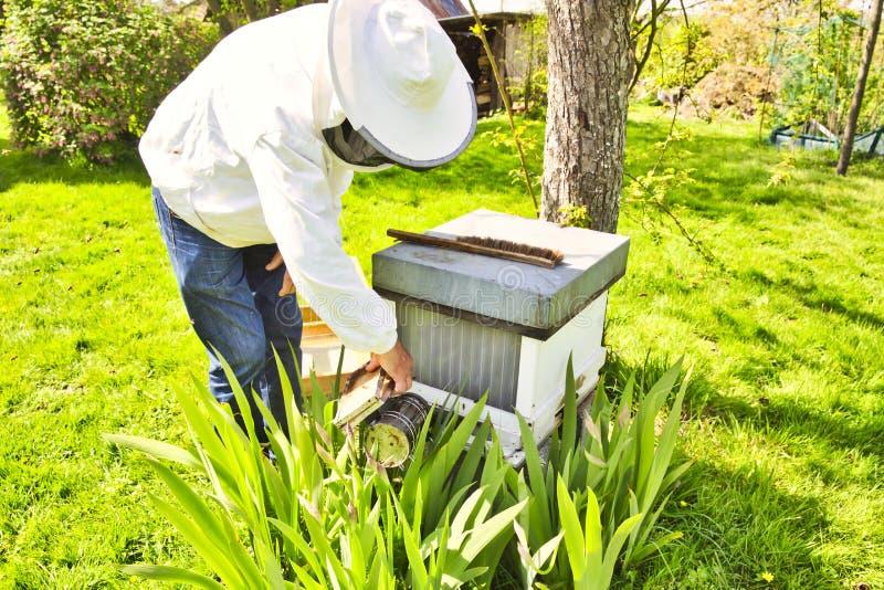Apiculteur commercial au travail, nettoyage et ruche d'inspection photos stock