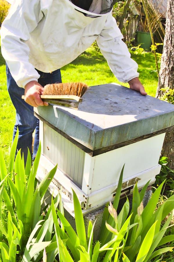 Apiculteur commercial au travail, nettoyage et ruche d'inspection photographie stock libre de droits