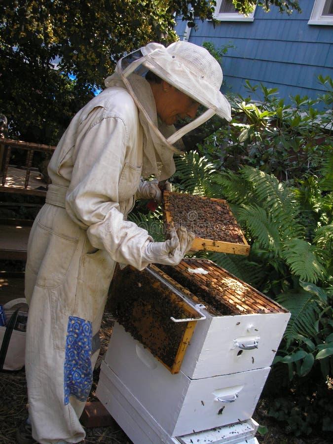 Apiculteur contrôlant la ruche image stock
