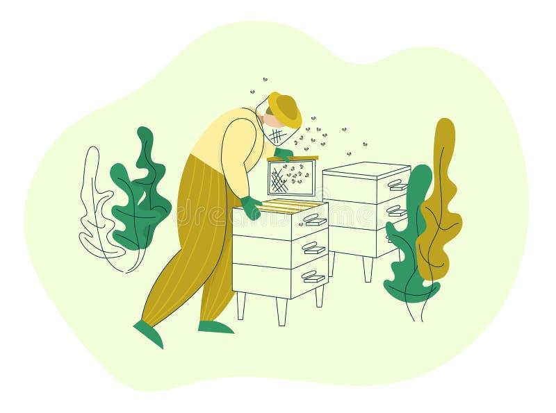 Apiculteur dans une tenue de protection travaillant au rucher avec des cadres de ruche Processus de fabrication organique d'affai illustration stock