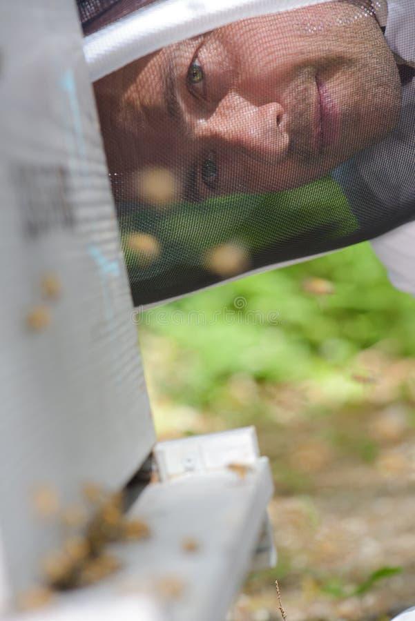 Apiculteur de plan rapproché regardant la ruche images stock