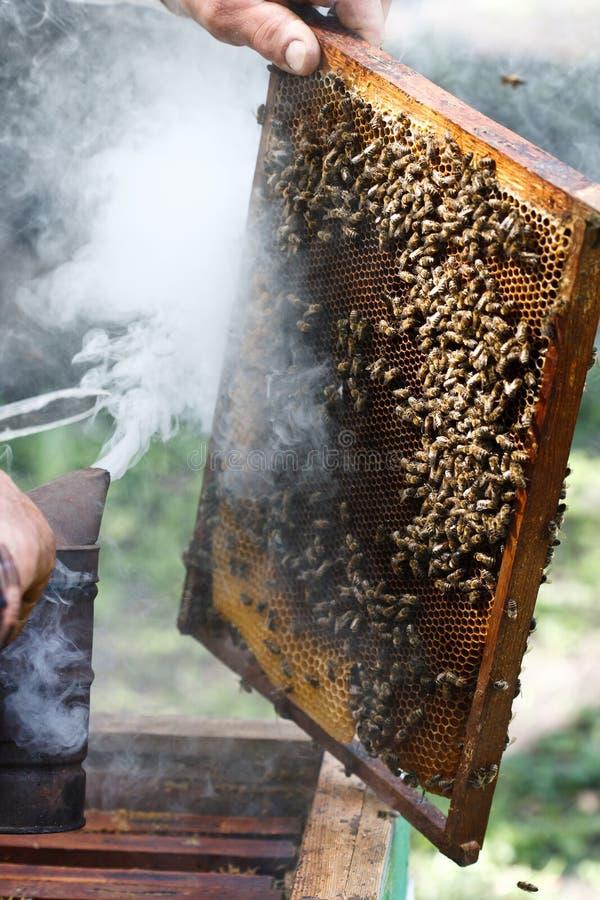 Apiculteur examinant la ruche photo libre de droits