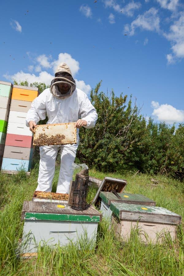 Apiculteur Holding Honeycomb Frame à la ferme photo stock
