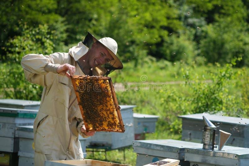 Apiculteur inspectant le cadre de nid d'abeilles au rucher au jour d'été Homme travaillant dans le rucher Apiculture Concept de l photographie stock libre de droits