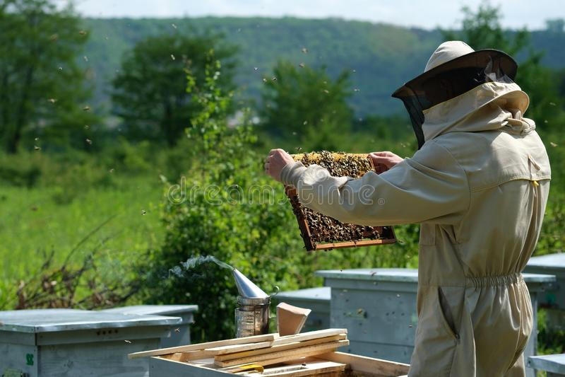 Apiculteur inspectant le cadre de nid d'abeilles au rucher au jour d'été Homme travaillant dans le rucher Apiculture Concept de l photo stock