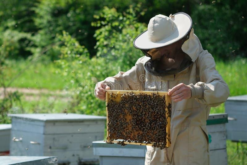 Apiculteur inspectant le cadre de nid d'abeilles au rucher au jour d'été Homme travaillant dans le rucher Apiculture Concept de l images libres de droits