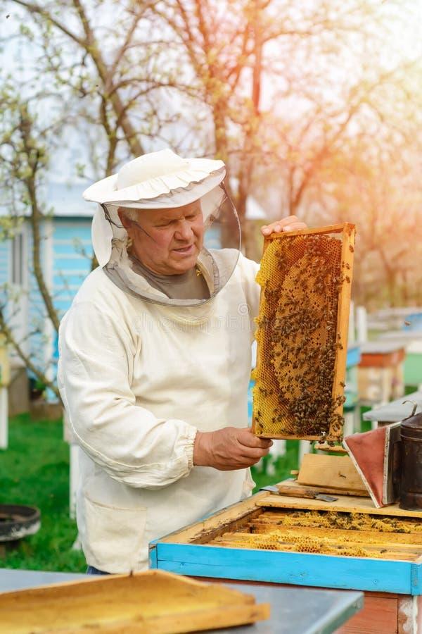 Apiculteur jugeant un nid d'abeilles plein des abeilles Apiculteur dans les vêtements de travail protecteurs inspectant le cadre  photographie stock libre de droits