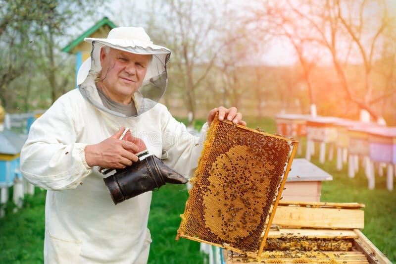 Apiculteur jugeant un nid d'abeilles plein des abeilles Apiculteur dans les vêtements de travail protecteurs inspectant le cadre  images libres de droits