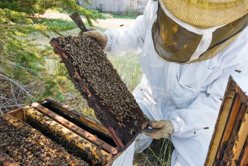 Apiculteur Looking à un cadre d'abeille photo stock