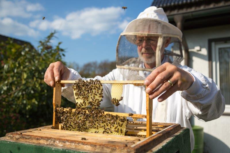 Apiculteur s'occupant de la colonie d'abeille images libres de droits