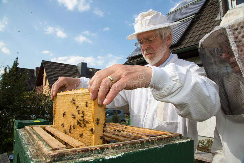 Apiculteur s'occupant de la colonie d'abeille images stock